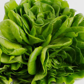 Our Salanova Lettuce with even leaves perfect for cooking, salads and many more.  Farm to Door Delivery of Fresh Lettuce in Manila