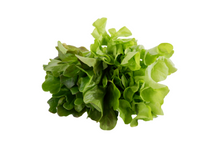 Load image into Gallery viewer, organic, zero-pesticides, non-gmo, hydroponic,oakleaf lettuce for manila delivery with price and where to buy