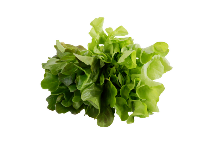 organic, zero-pesticides, non-gmo, hydroponic,oakleaf lettuce for manila delivery with price and where to buy