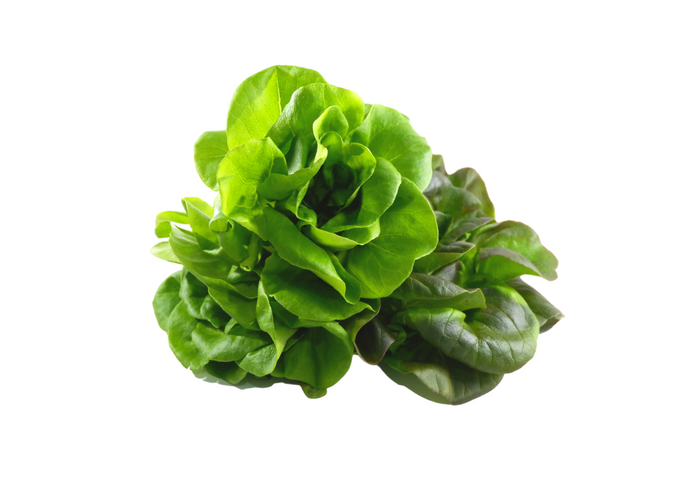 organic, zero-pesticides, non-gmo, hydroponic, butterhead lettuce for  manila delivery with price and where to buy