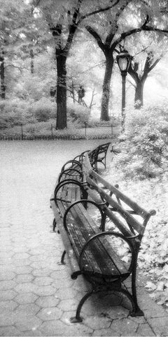 Bench and Lamp - Central Park, NY