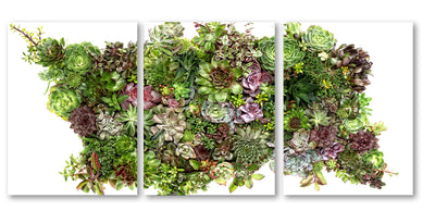 Collective Succulents Trilogy