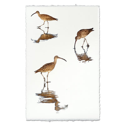 Three Whimbrels