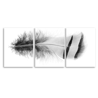 Feather #15 Trilogy