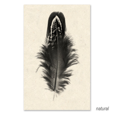 Feather #3 grand format