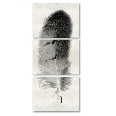 Feather #7 (Owl) Trilogy