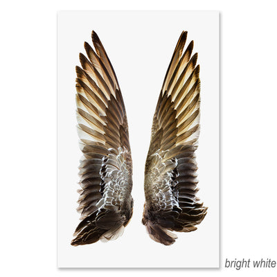 Gadwall Duck Wings grand format