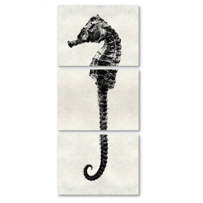 Sea Horse #2 trilogy