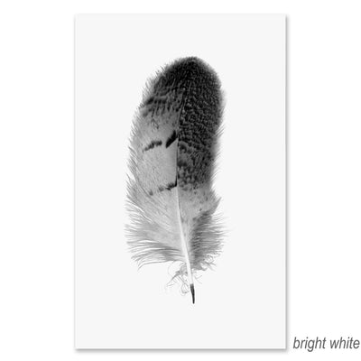 Feather #7 grand format