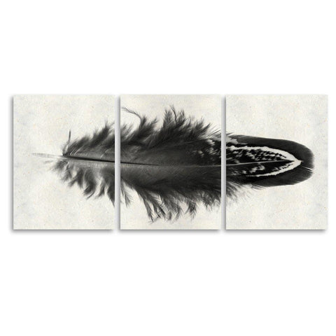 Feather #3 Trilogy Horizontal