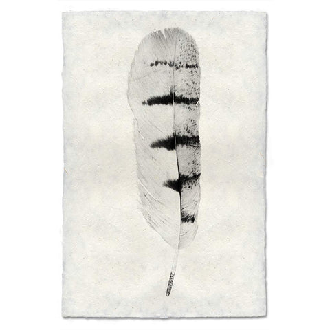 Feather Study #8
