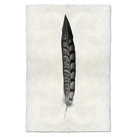 Feather Study #11