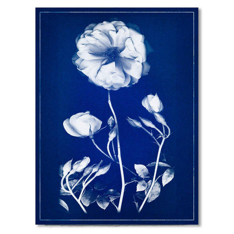 Graphite Rose blue print