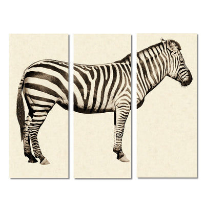 Zebra Trilogy