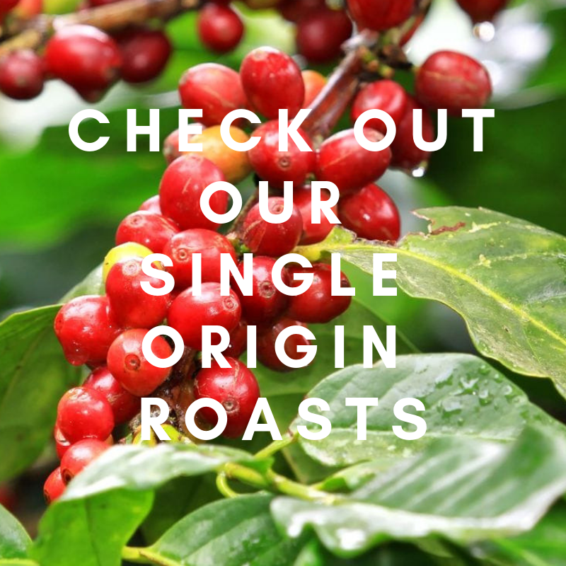 singe origin coffee roasts