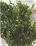 Green Floral Crafts Floral Filler Greenery - Dried Grasses
