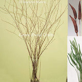 Green Floral Crafts Natural Birch, 4-5' Tall, Pods & Feather Millet - 24 / 3-4 Feet