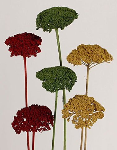 Pack of 5-7, Preserved Yarrow Dried Flowers - 3-Color Mix (Yellow, Red, Green)