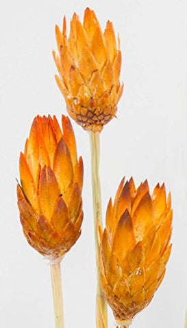Preserved Nectarine Protea Flowers (3 Stems) & Palms