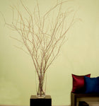 Natural Birch 3-4' Tall, 12 Birch Branches & Feather Millet