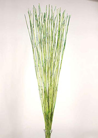 "Green Floral Crafts | Decorative Reed Sticks | Approximately 4 Ft. by 1/16"" Diameter 