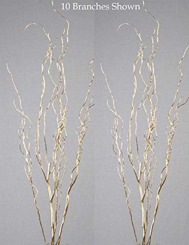 Gold 5-6 Ft Tall Curly Willow- Pack of 8-10 Stems