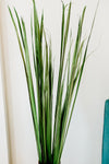 Wide Tall Grass | Light Banana Green | Bulk Pack