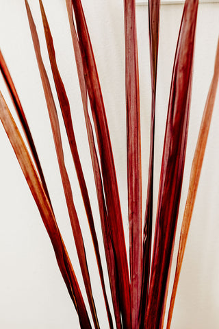 Thick Palm Stalks | Brown