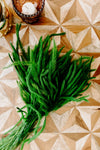 Feather Grass | Green