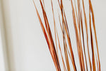 Wide Tall Grass | Autumn Orange | Half Pack