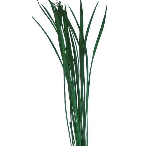"Green Floral Crafts 40"" Tall Dried Grasses (Dried Foliage leaves), 3 Pack of 75 - Dark Sage Green"