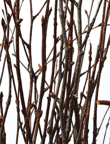 Natural Birch Branches, 4-5' Tall