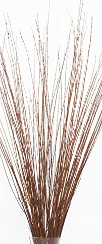 4-5 ft Tall, Asian Willow, Bunch of 60 Tall Sticks (Vase Not Included) - Burnt Oak