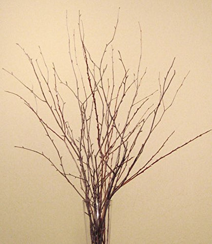 Small Birch Branches 2-2.5 Feet Tall, Pack of 18 - Natural Birch & Caspia