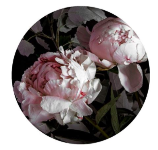 Peony card by Lucy Gauntlett