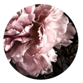 Peony 3 card by Lucy Gauntlett