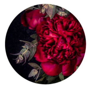 Scarlet Peony card by Lucy Gauntlett