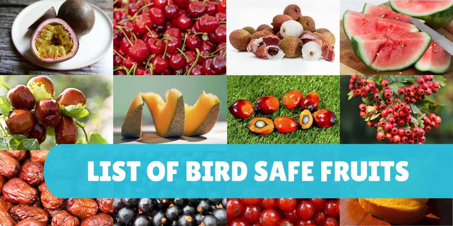 List of safe fruits for parrots