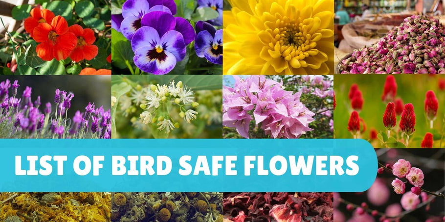 List of safe flowers for parrots