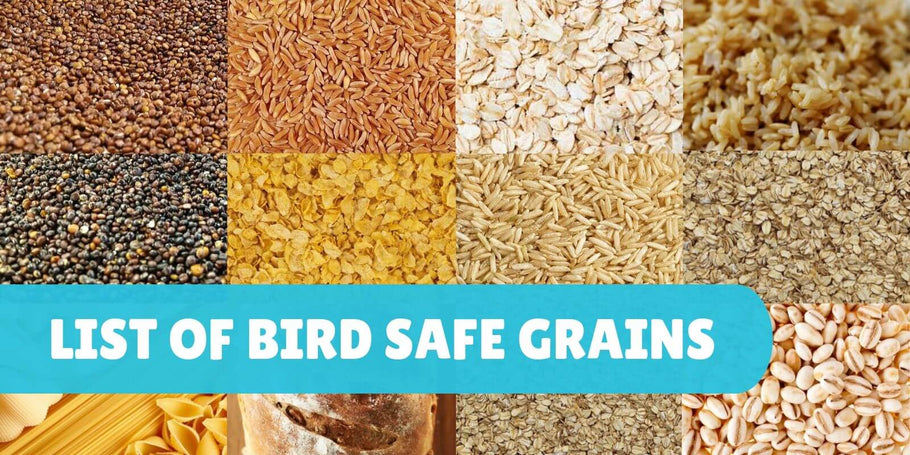 List of safe grains for parrots