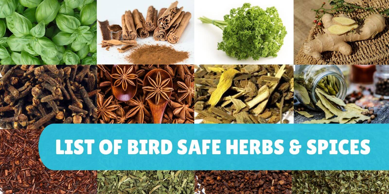 List Of Safe Herbs & Spices For Parrots | Parrot Funhouse