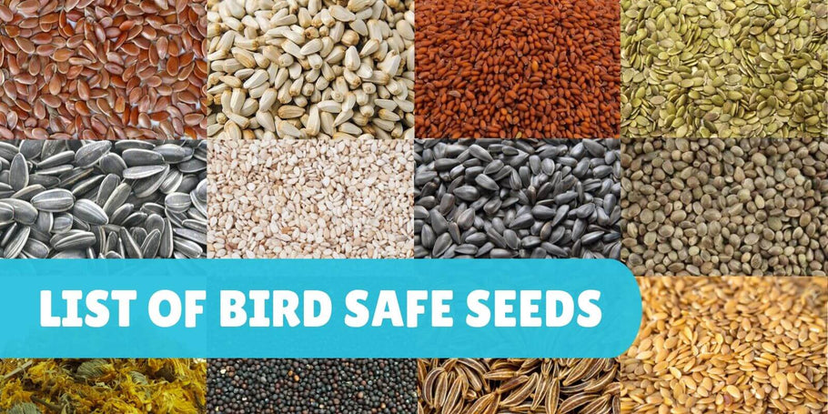 List of safe seeds for parrots