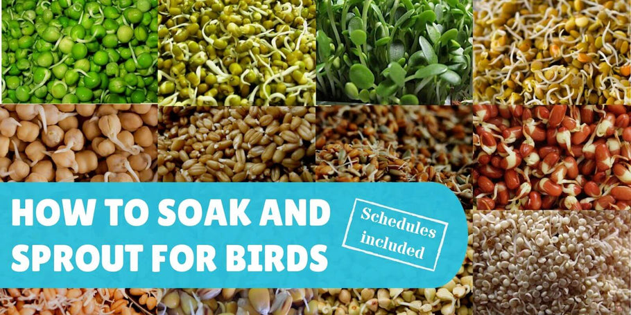 How to soak and sprout for birds (schedules included)