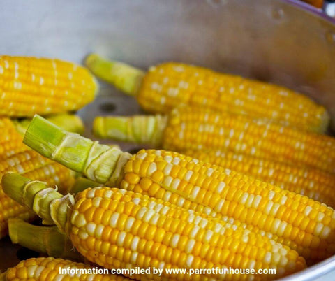 Steamed corn safe for parrots
