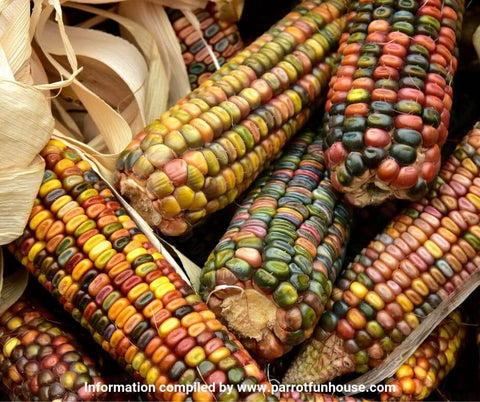 Raw indian corn safe for parrots