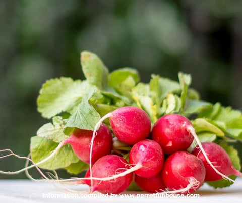 Red radish safe for parrots
