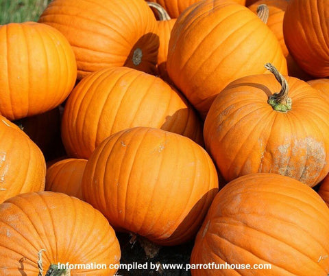 Pumpkins safe for parrots