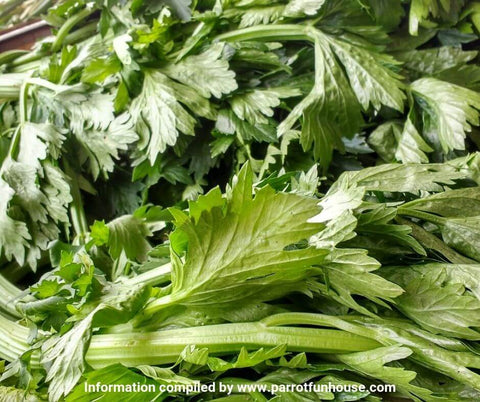 Celery leaves safe for parrots avoid celery stalk