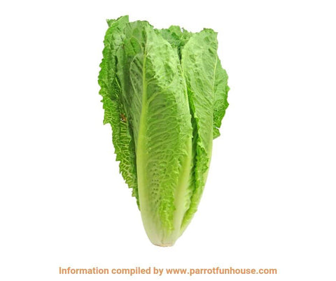 Romaine lettuce safe for parrots