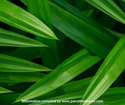 Pandan leaves safe for parrots